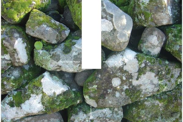 08-stones-2F60A9466-70B4-CBD2-D35D-0EE18B3921C4.jpg